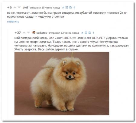 25 комментариев из социальных сетей