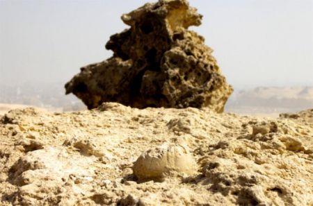 Окаменелый морской еж доказал древность Сфинкса и пирамид