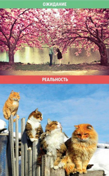 Весенние ожидания и реальность