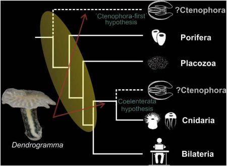 Открыта новая форма жизни - морские грибы