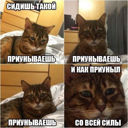 Смешные картинки с надписями (25 фото)