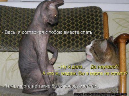 Забавные зверушки от Котоматрицы
