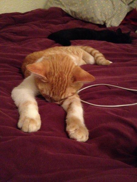 Кошкам тоже нужен выходной