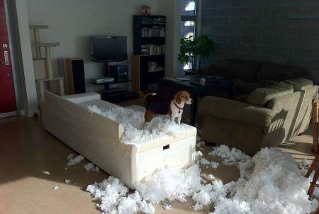 Так вот чем заняты псы, когда хозяев нет дома