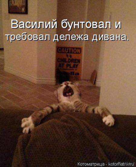 Лучшие котоматрицы недели (34 фото)