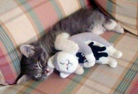 Подборка самых ценных снимков котов