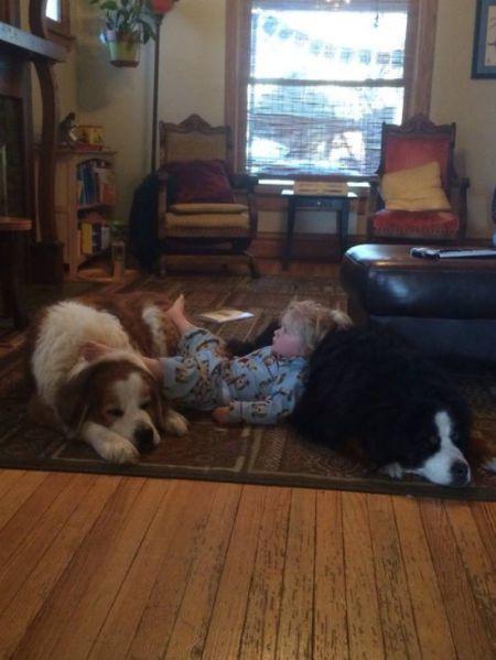 Веселые собаки фото