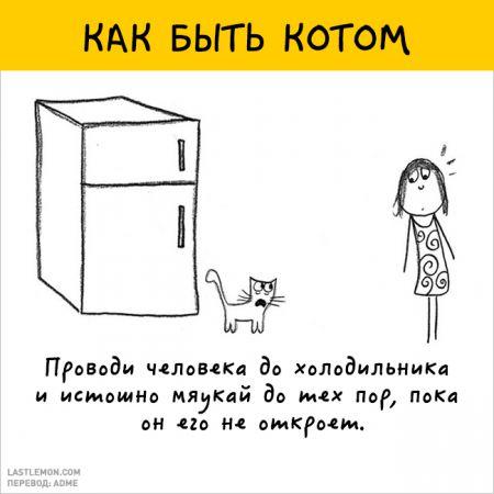 12 крутых картинок о том, как быть котом