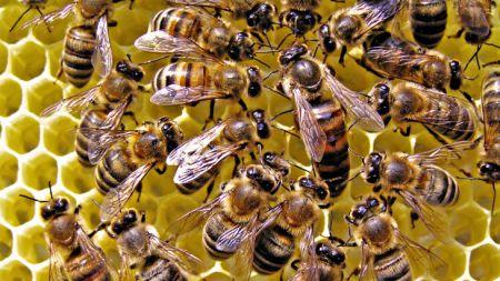 7 удивительных фактов о способностях животных предсказывать будущее