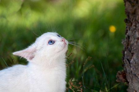 10 самых глупых мифов о кошках, в которые верят практически все