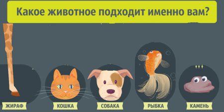 Какое животное подходит именно вам?