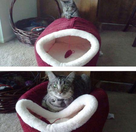 Прикольные фото котов которым плевать на логику