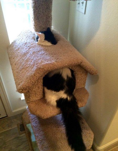 Фото приколы. Уморительные фото котов