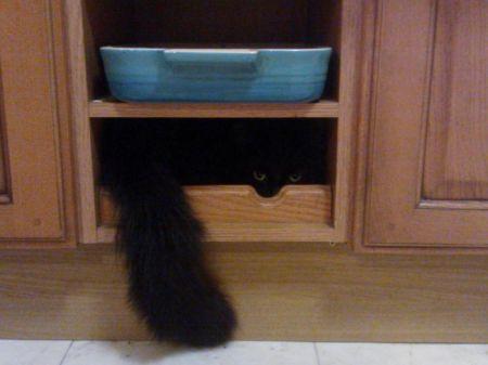 Коты которые думают что отлично спрятались