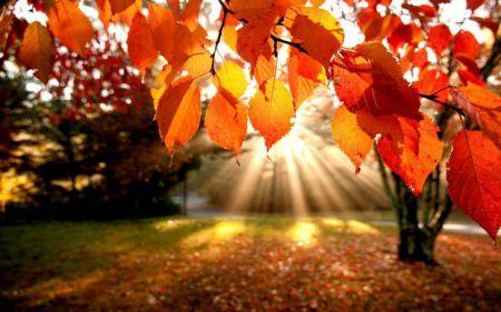 10 уютных фактов об осени