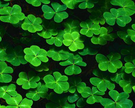 Как привлечь удачу: 4 способа от эксперта позитивной психологии