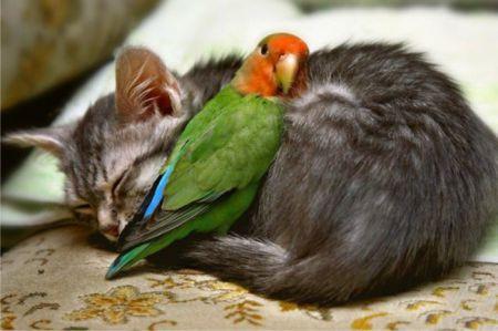 Животные не упускают возможности погрется