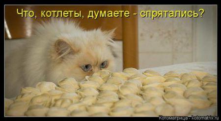 Свежая котоматрица. юмор с кошками