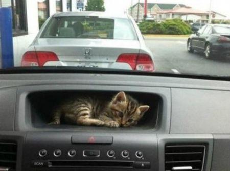 Коты которым плевать на ваше личное пространство