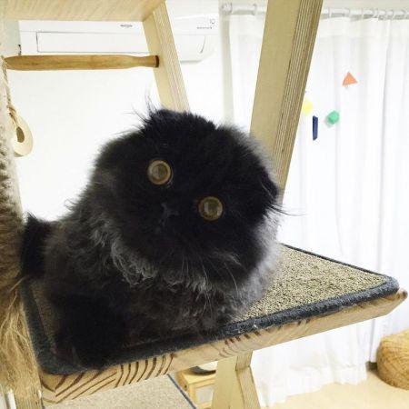 Кот с огромными гипнотическими глазами