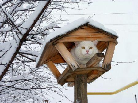 Кошки словно птицы