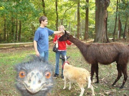 Животные умеют фотобомбить