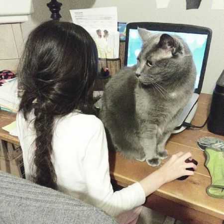 Кошки это самые настоящие пушистые засранцы