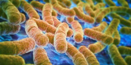 Зачем кишечнику микрофлора?