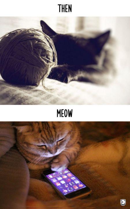 Как техника изменила жизнь котиков
