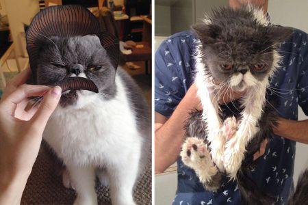 Кошки до и после купания, забавно получилось