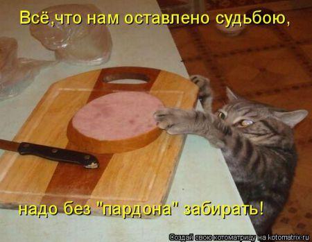 Лучшие котоматрицы недели большая порция