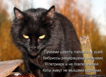 Лучшие котоматрицы недели (48 фото)