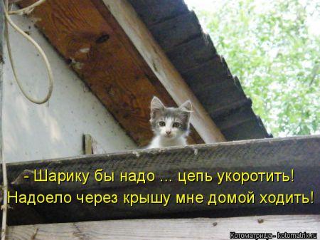 Свежая котоматрица (18 фото)