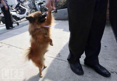Собакам наплевать на стереотипы они ходят как люди