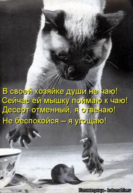 Смешные котоматрицы от 6 сентября 2016
