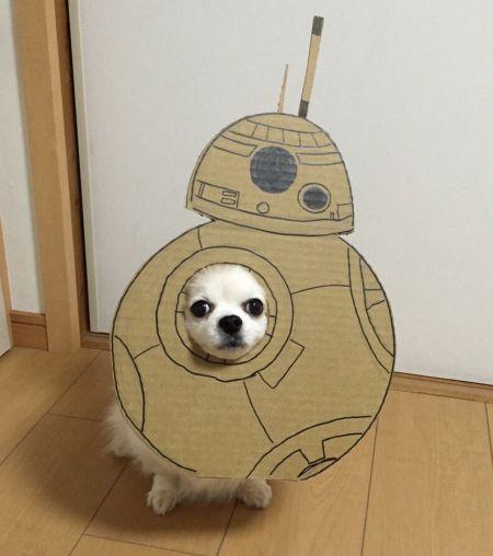 Уморительные костюмы делает девушка для своей собаки