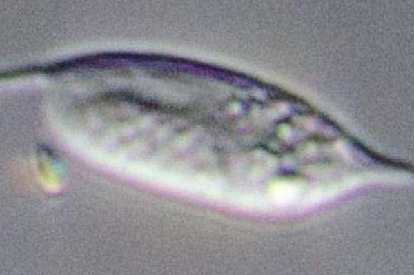 Ученые обнаружили самый неуловимый организм на Земле