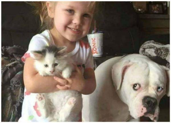 Фото обиженной собаки вызвало бурю сочувствия и негодования