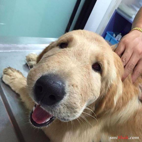 Фото собак которые съели пчелу