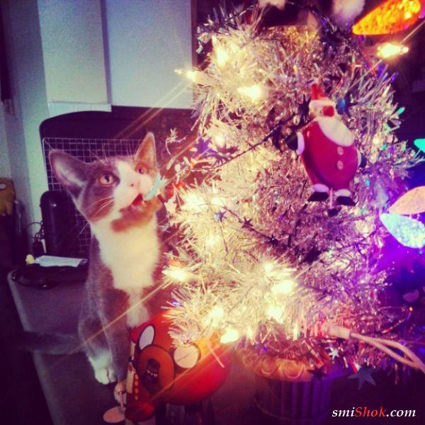 Коты и новогодние украшения