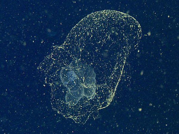 В США выловили в океане загадочное существо