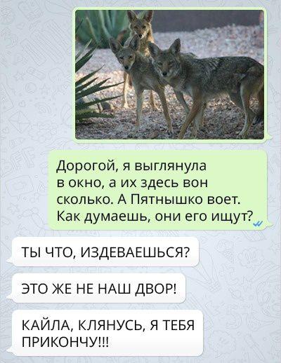 Переписка девушки которая приютила собаку