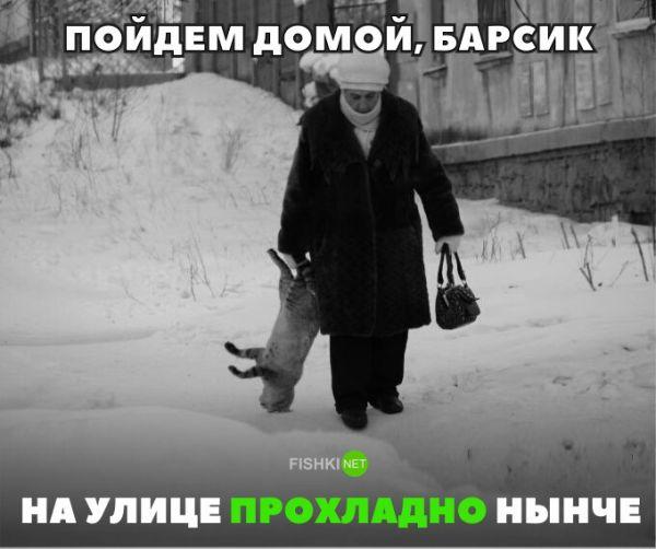 Смешные картинки с надписями от 14 декабря 2016
