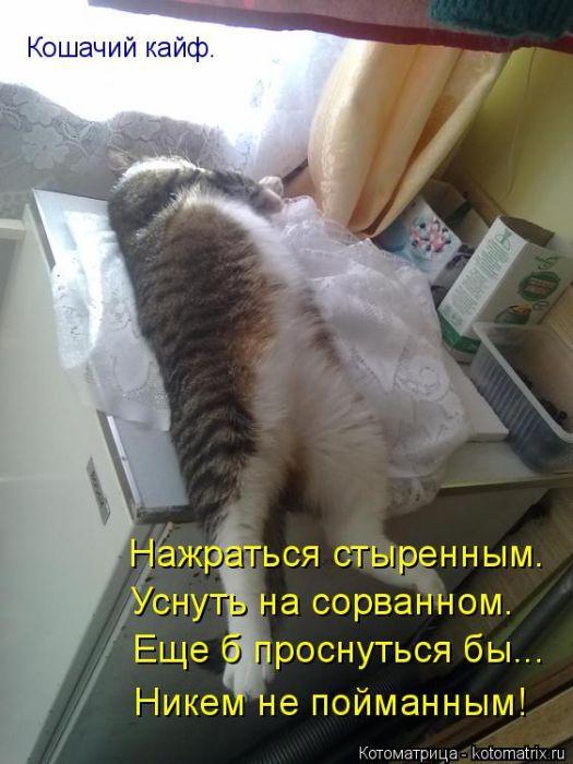 Картинки котиков с надписями (33 фото)