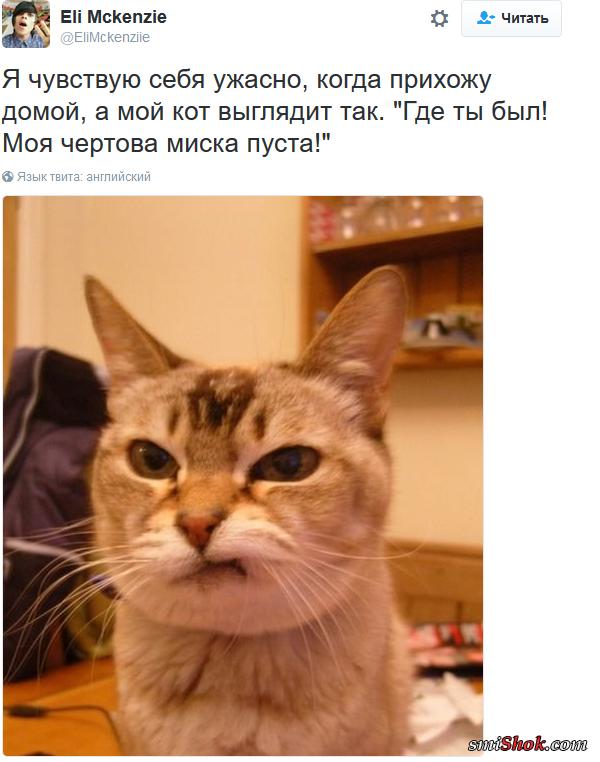 Шедевральные записи владельцев котиков в соцсетях