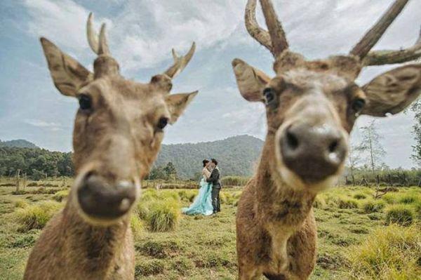 Свадебные фото, которые стоило бы сжечь