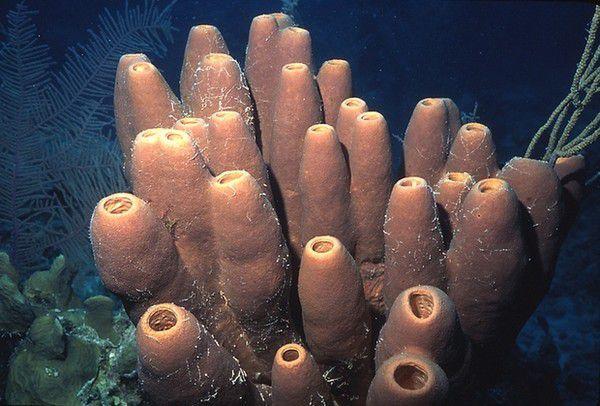 Ученые назвали организм, которой переживет смерть всего живого на Земле