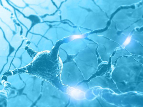 Исследование американских нейробиологов перевернуло устоявшиеся представления о мозге