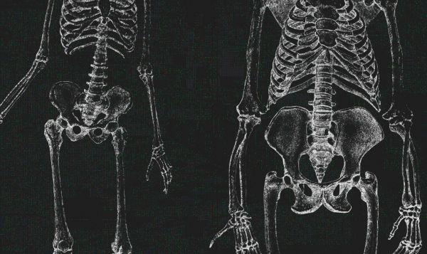 5 вещей, которые эволюция изменила в сексе