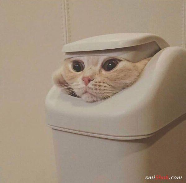 """Котики пародирующие """"Игру престолов"""" повеселили сеть"""